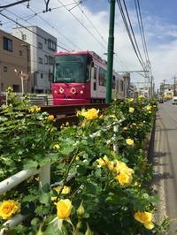都電沿線散歩 - 心のカメラ   more tomorrow than today ...