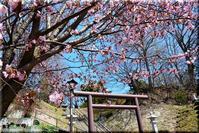 桜咲く! - 北海道photo一撮り旅