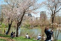 中島公園で桜を楽しむ人々 - 照片画廊
