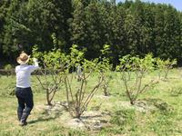 ゴールデンウイークは草刈りウイークなのだ! - マルベリークラブ中部 <自然の叡智を桑・蚕に学ぼう 環境保全・里山づくり>