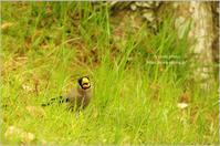 初めましての鳥さんは。。。 - It's only photo