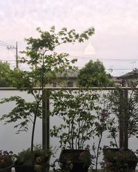 夕暮れ時のテラス - kukka  kukka