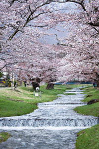 桜を求めて会津へvol.2 - Mein Alltagsleben  〜カメラとおでかけ〜
