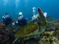 海況良好!人気のナズマドは大混雑でした(^^) - 八丈島ダイビングサービス カナロアへようこそ!