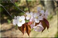 桜咲く!2 - 北海道photo一撮り旅