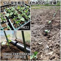 メロン先行植え付け - ■■ Ainame60 たまたま日記 ■■