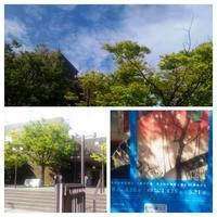 『広重ビビッド』2回目@新潟市美術館 - ♪アロマと暮らすたのしい毎日♪