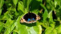 ゴールデンウィーク - 紀州里山の蝶たち