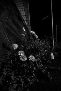 路傍 - Yoshi-A の写真の楽しみ