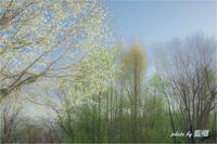 春の息吹 - 藍の郷