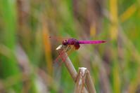 山原遠征その1 - 蝶と蜻蛉の撮影日記