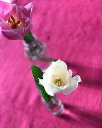 そ〜っとのぞいて見てごらん - nico☆nicoな暮らし~絵付けと花とおやつ