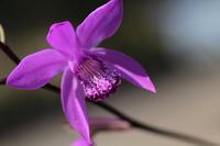 紫蘭 - きずなの家