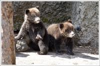 クマはしご① のぼりべつクマ牧場編 - メタのマクロ視点な奇跡なんて白熊の為