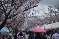 桜祭り - 気まぐれ写真日記