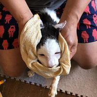朝のお手入れ - ぶつぶつ独り言2(うちの猫ら2018)