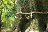 大木 - ある日の足跡