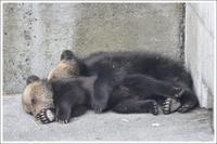 クマはしご② 昭和新山熊牧場編 - メタのマクロ視点な奇跡なんて白熊の為