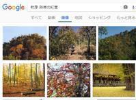 熱帯の紅葉 - nshima.blog
