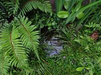 庭「雨の日のビオトープも中々」 - 孤影悄然