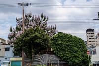 桐の花の咲く家 - Amo Amo Annex