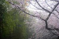 雨の日と連休明けは・・ - できる限り心をこめて・・Ⅲ