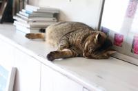 にゃんこ劇場「モフりたーーい!」 - ゆきなそう  猫とガーデニングの日記