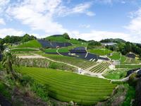 和束町の茶畑 - とりあえず撮ってみました