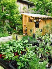 Kusaniwa Open Garden 2017  5月13.14日 ー青空アート市ー - Healing Garden  ー草庭ー