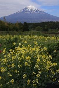 ビタミン色で元気モリモリ~ - 富士山大好き~写真は最高!