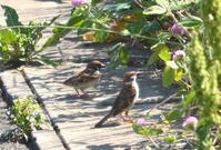 ピーカンの朝 - 浅川野鳥散歩