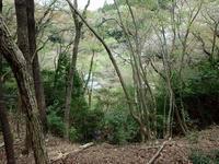 シオヤトンボの羽化 - 加茂のトンボ (トンボ狂会)