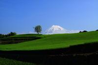 29年5月の富士(2)茶畑と富士 - 富士への散歩道 ~撮影記~