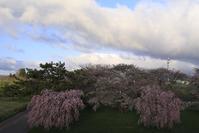 2017 東北桜紀行-津軽富士- - さんたの富士山と癒しの射心館