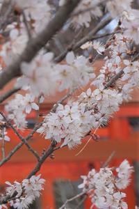 京都 - ふくろほーのつぶやき