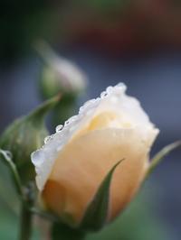 雨の日には物語を - hibariの巣