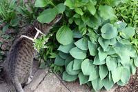 昨日のお花とカエルさん - 小さな森のキキとサラ