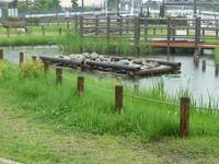 雨中 - Longhill Net Blog