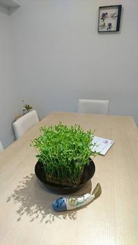 我が家の韓国料理教室新メニュークラススタートです - 今日も食べようキムチっ子クラブ (料理研究家 結城奈佳の韓国料理教室)