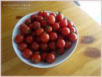 たくさんの プチトマト。 - かいじゅうたちのいる我が家。