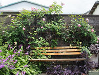 今日のお庭 - HANA 花♪菜園日記