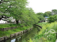 川越散歩5月3日新緑 - 川越散歩