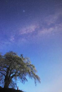 上発知の枝垂桜1 - Patrappi annex