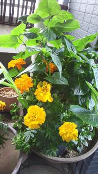 花にはエネルギーが - 手作りみつろう蜜蝋キャンドル|たかこのハーブ園