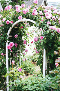 rose garden* - Avenue No.8