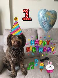 Buon 1° Compleanno di MOKO 🐶モコ1歳の誕生日🎂 - ITALIA Happy Life イタリア ハッピー ライフ  -Le ricette di Rie-