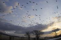 空いっぱいに - ekkoの --- four seasons --- 北海道