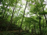 新緑の大万木山② - 清治の花便り