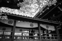 Kyotoful - 2017 spring - #9 - NINE'S EDITION