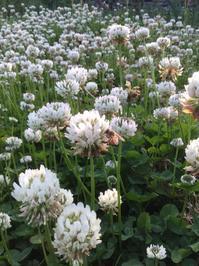 密源ガーデン - お花畑の小さな家